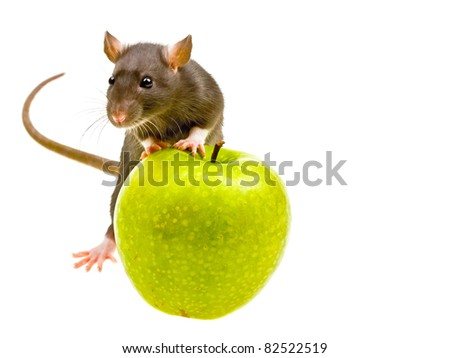 Funny rat and green apple isolated on white background - stock photo