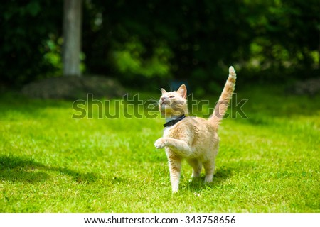 Funny red cat - stock photo