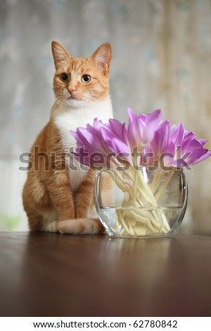 funny red cat and vase with crocuses - stock photo