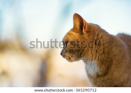Funny red cat on the snow - stock photo