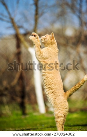 Funny red-haired cat jumps on green grass - stock photo