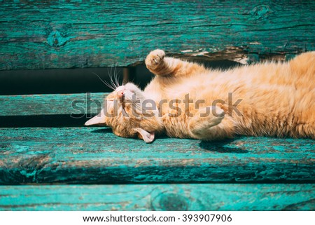 Funny Red Kitten Cat Sleeping On A Bench In Park In Hot Summer Day - stock photo