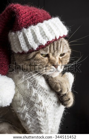 Funny, serious and sad cat in a red Christmas hat of Santa Claus on a dark background - stock photo