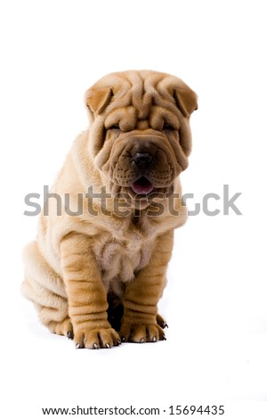 Funny sharpei puppy isolated on white background - stock photo