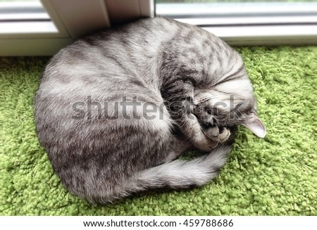 Funny sleeping cat near the window, view from the top - stock photo