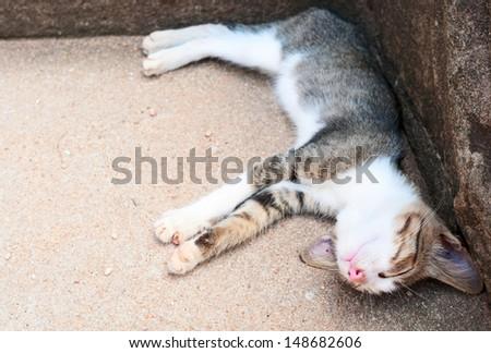 Funny sleeping kitten on stone background  - stock photo