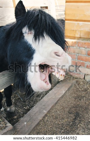 Funny smiling horse portrait. The horse showing teeth appears to be laughing.  - stock photo