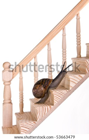 Funny snail making good progress on wooden stairs - stock photo