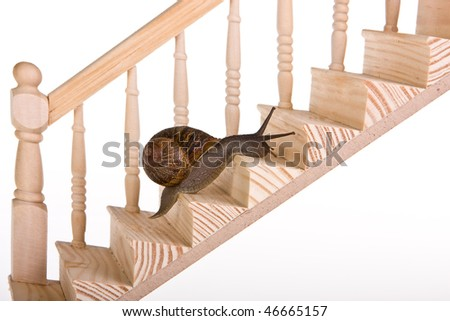 Funny snail trying to climb wooden stairs - stock photo