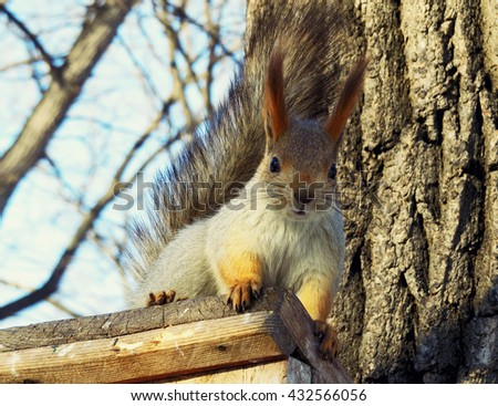 Funny squirrel looking with curiosity from the roof of his manger - stock photo