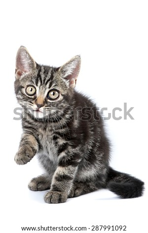 Funny striped kitten sitting and looking at the camera (isolated on white)