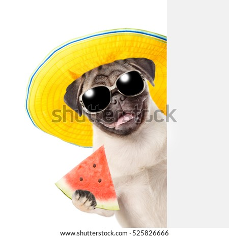 Funny summer dog with sunglasses holding watermelon and peeking from behind empty board