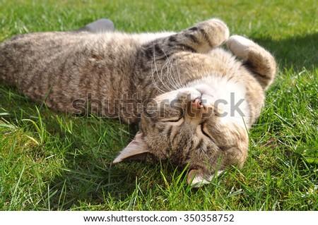 funny Tabby cat lying on green grass - stock photo