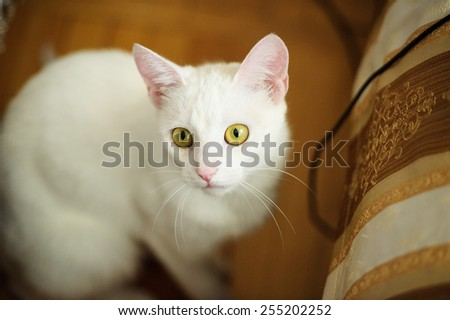 Funny white cat - stock photo