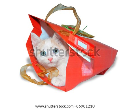 Funny white kitten in red packet - stock photo