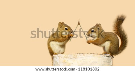 Funny young squirrels on a log with a wishbone, making wishes. Part of a fun series. - stock photo