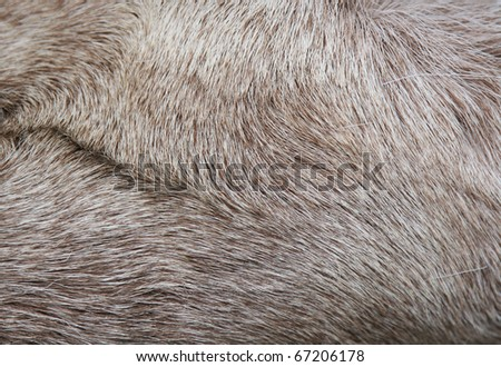 fur - stock photo