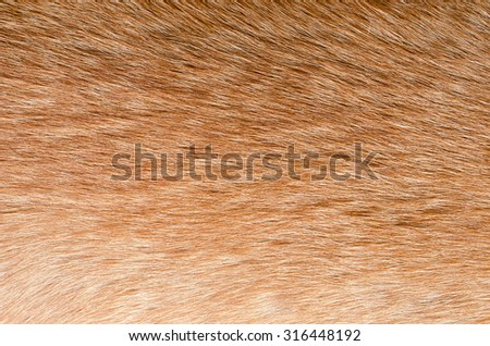 fur animal texture - stock photo