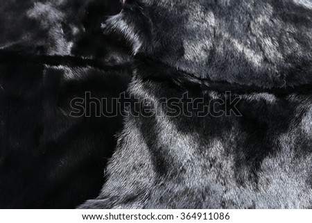 Fur of black mink