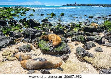 Fur seals at Punta Carola beach, Galapagos islands (Ecuador) - stock photo