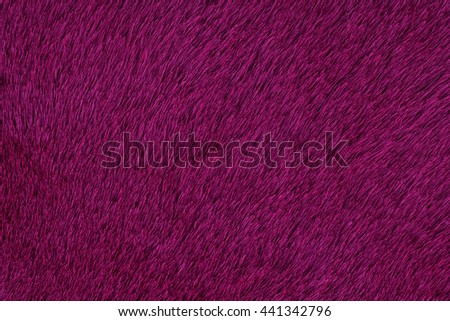 Fur texture purple, sheep sheared. Background, abstract - stock photo