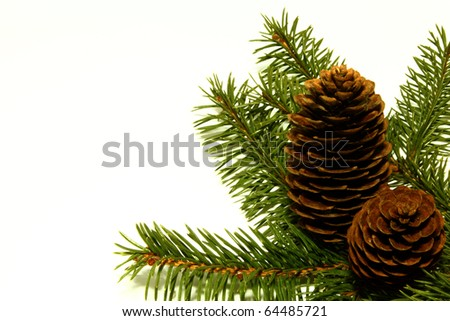 Fur-tree branch with cones - stock photo