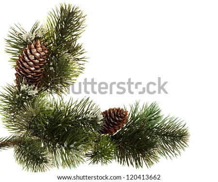 Fur-tree branches isolated on a white background . Fir branch with fir cones isolated on white - stock photo