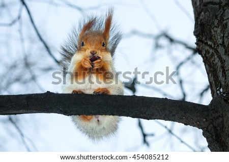 Furry gray squirrel on branch in winter - stock photo