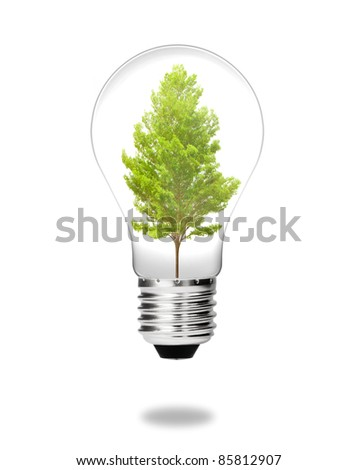 future green energy saving eco concept, tree growing in electric light bulb isolated on white