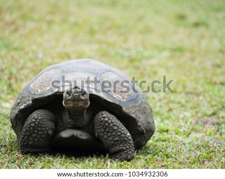 Turtle Front View Stock Images Royalty Free Images