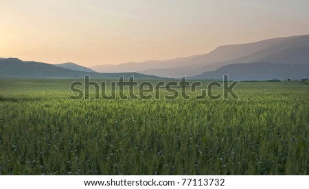 Galilee, Israel, dawn, spring, field, sunset, mountains, wheat,