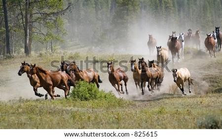 Galloping Horse Herd - stock photo