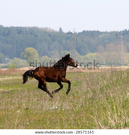 Gallopping horse