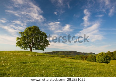 Gallows Hill - Memorial maple tree on the mystic place in Votice, Czech Republic - stock photo