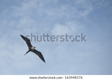 Gannet Bird while flying on the light blue sky background - stock photo