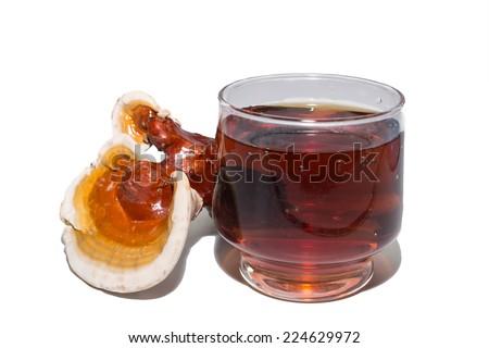 Ganoderma lucidum and tea cup - stock photo