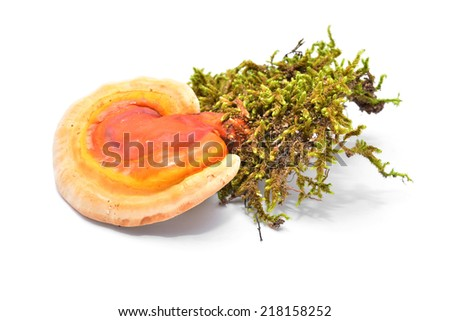 ganoderma lucidum, the lingzhi or reishi mushroom  - stock photo