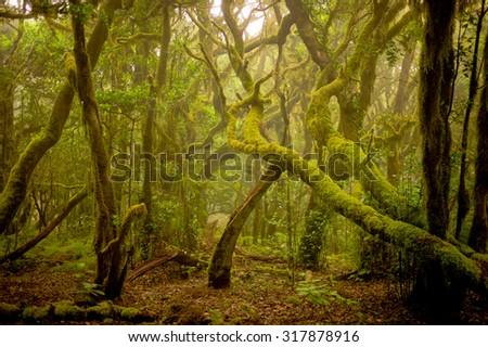 Garajonay National Park, La Gomera Island, Canary Islands, Spain - stock photo