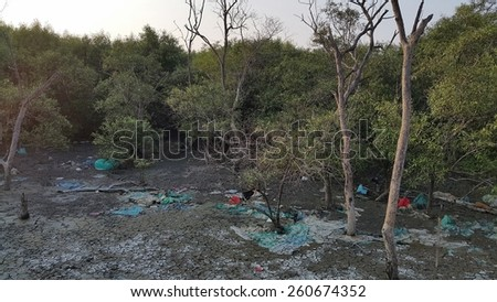Garbage at mangroves tree on shoreline at low tide for environmental pollution concept   - stock photo
