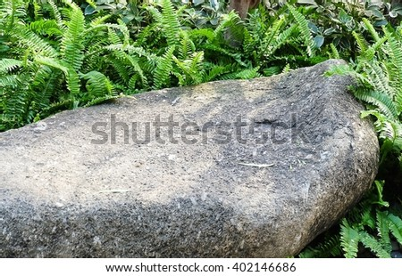 Garden and Plant, A Stone in The Garden Decorate with Green Ferns. - stock photo