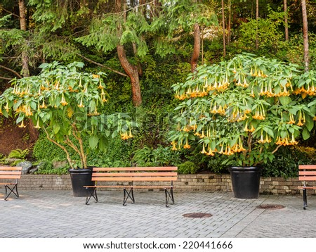 Garden bench surrounded by lush vegetation, Brugmansia (Angel's Trumpets) - stock photo
