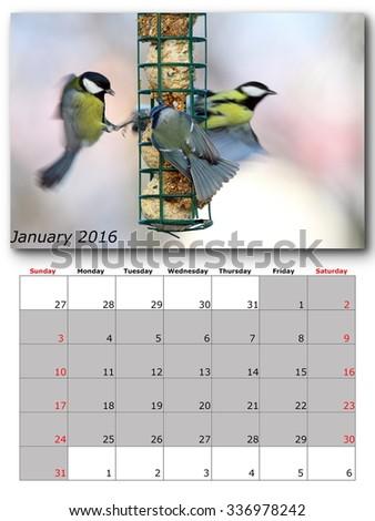 garden birds calendar january 2016, layout - stock photo