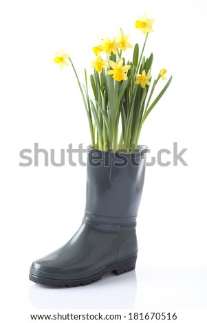 garden boots and daffodil flowers - stock photo