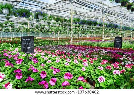 Garden centre - stock photo