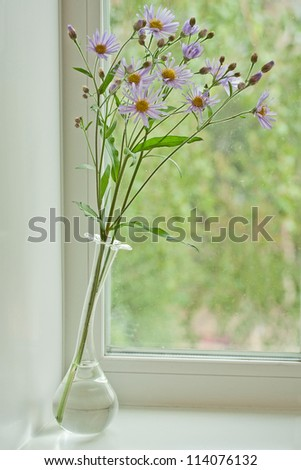 Garden chrysanthemum in glassed vases - stock photo