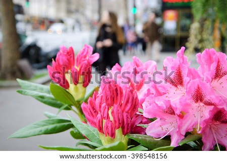 Red Violet Rhododendron Stock Photos Royalty Free