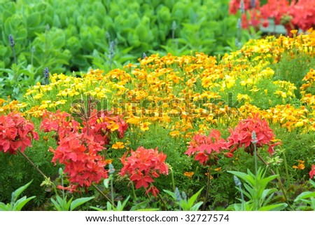 Garden close up - colorful flowers - stock photo