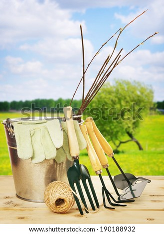 Garden composition with seedlings and tools outdoor - stock photo