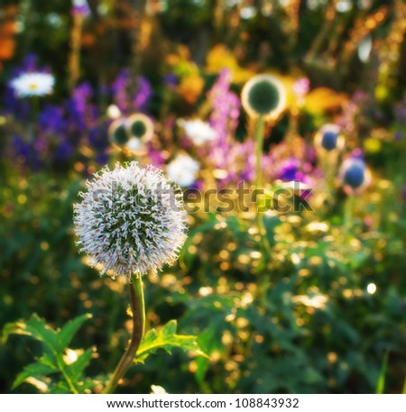 Garden dreams at sunset in summertime - stock photo
