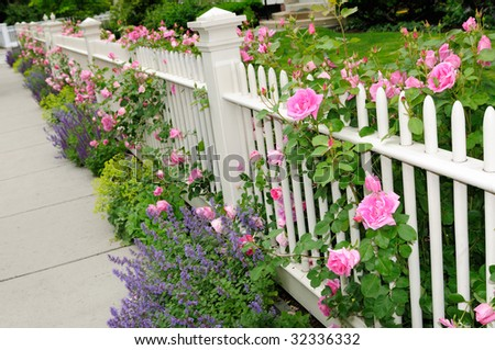 Garden fence with pink roses, salvia, catmint and lady's mantle - stock photo
